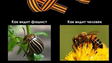 Photo of Разница зрения