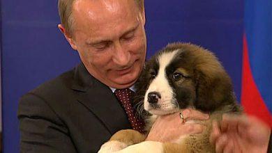 Photo of Россия будет защищать тех, кто считает себя частью русского мира