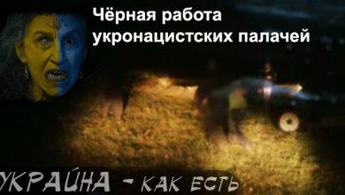 Photo of Украинские палачи убивают ни в чём не повинных людей — видео