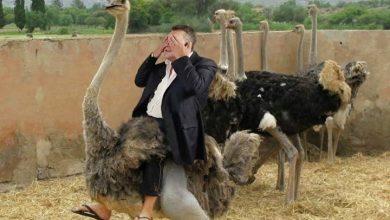 Photo of Янукович и страусы