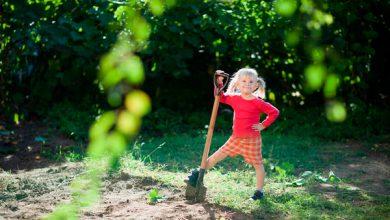 Photo of Полезные советы для начинающих и опытных огородников