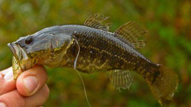 Photo of Путчисты выдумали новый налог — за любительскую ловлю рыбы…
