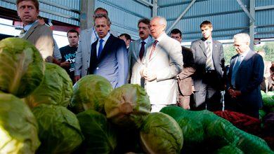 Photo of Николай Азаров с репликой о картошке и капусте