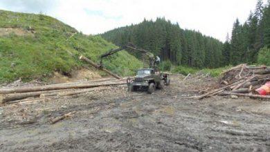 Photo of Украинская власть вырубает карпатские леса ФОТО