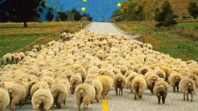 Photo of Украина как «сырьевой придаток Запада»