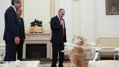 Photo of Интервью Владимира Путина японским СМИ