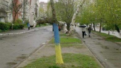 Photo of Украинские ученые доказали: Березы и подорожник — доказательство экологической агрессии России