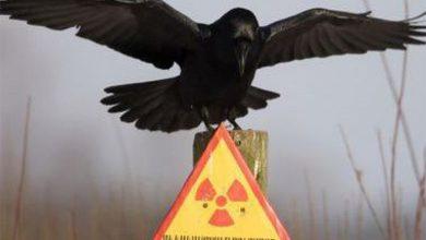 Photo of Украине грозит атомная катастрофа: Западные экологи беспокоятся