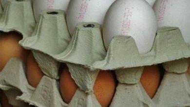 Photo of В Польше проблема с яйцами, вся надежда на Украину