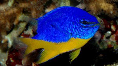 """Photo of Политолог прокомментировал сравнение украинцев с """"аквариумными рыбками"""""""