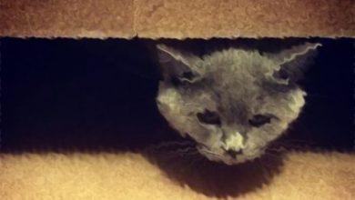 Photo of ПАСЕ: пепел кота Скрипаля