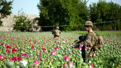 Photo of Под присмотром НАТО в Афганистане производят рекордные партии героина