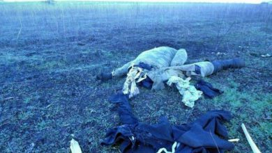 Photo of Двадцать террористов Порошенко подорвались на минном поле