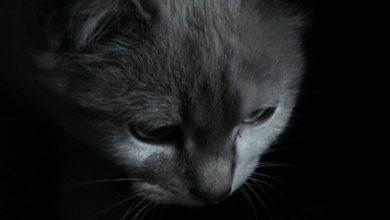 Photo of Томос Шредингера: гибридная составляющая
