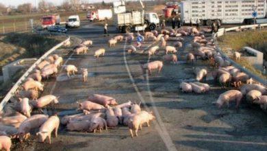 Photo of Хозяева сигналят украинским рабам
