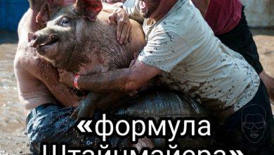 Photo of Киеву придётся отвечать за саботирование «формулы Штайнмайера»
