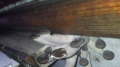 Photo of В поезде Запорожье — Бердянск выросли грибы